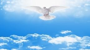 Колектив компанії УВК вітає Вас з днем Святої Трійці!